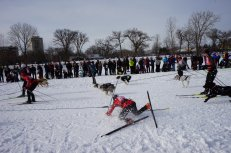 Crash Landing at the Loppet
