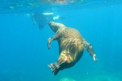 April 19 Swimming with the sea lions, photo by Captain Patsee Ober