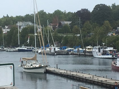 September 10 Gaviidae sitting peacefully at the main dock in Tobermory