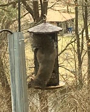March 9 Upside-down Squirrel Cake?