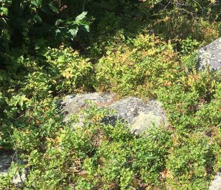 August 14 Blueberry stash on Armour Island