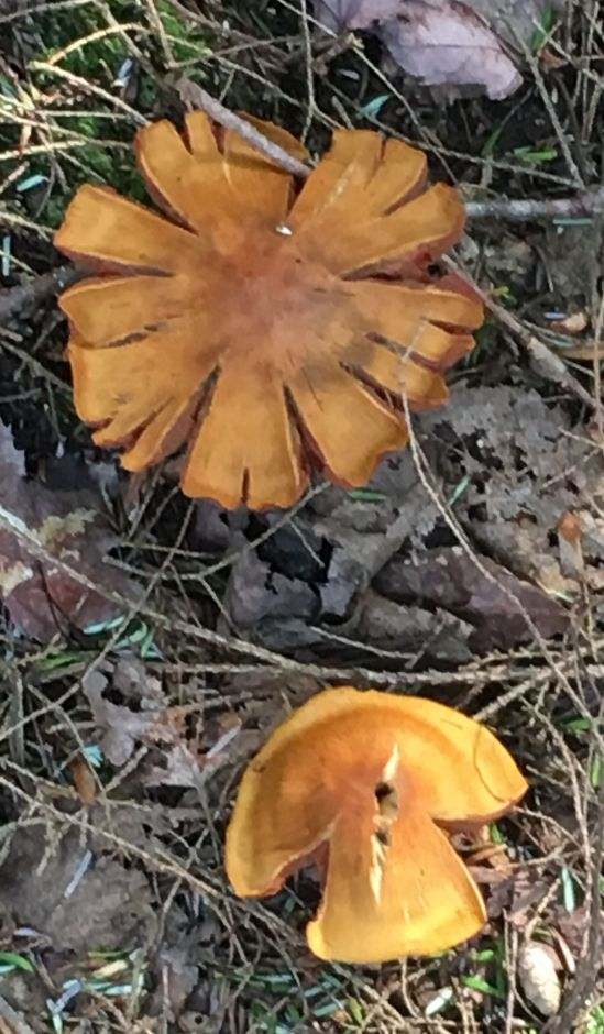 Mushroom on the way to Crater Lake - Baie Finn