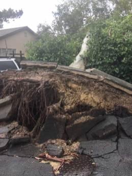 Feb 3 Uprooted tree after big rainstorms, Santa Barbara