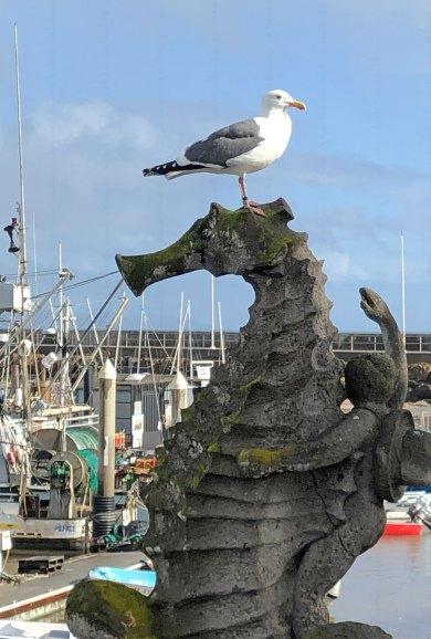 Feb 2 Sea Bird Sea Horse