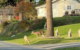 Oct 31 A blonde deer!