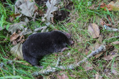 We stumbled across a mole. As you do.