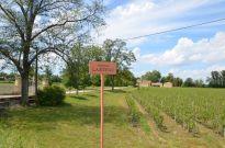 Chateau Larteau and hail damaged vines
