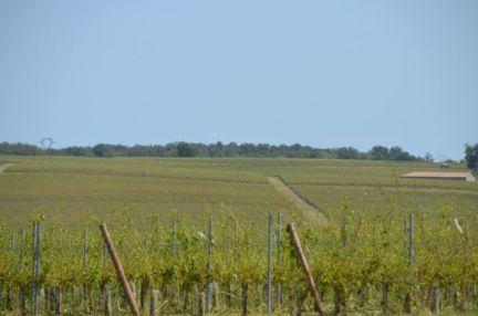 No harvest near Ch Bonnet for miles