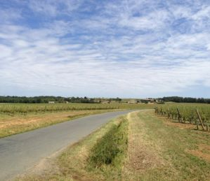 Road from Daignac to Ch Bonnet, a wasteland