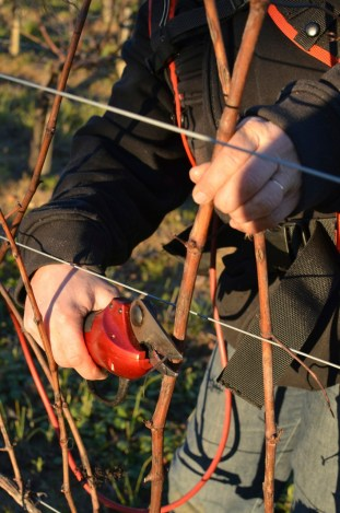 These secateurs can trim your fingers.