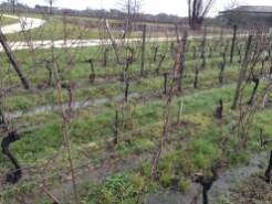 Clay soils retain the heavy rain.
