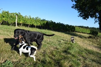 Pavie, Palmer and Margaux