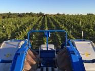 2015-Bauduc-start-of-red-harvest-11