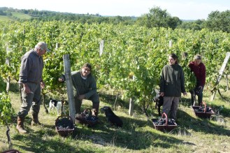 2015-Bauduc-start-of-red-harvest-15