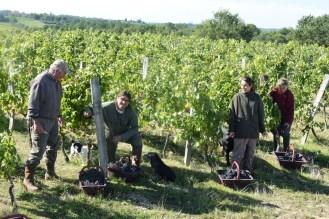 2015-Bauduc-start-of-red-harvest-15