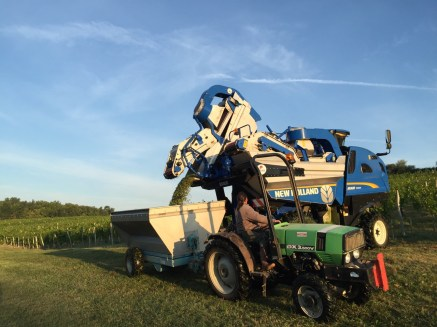2015-Bauduc-white-harvest-16