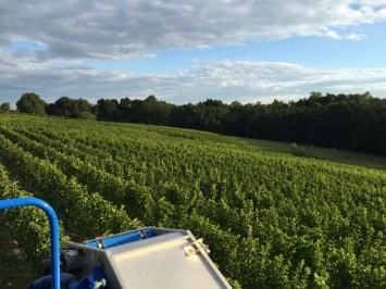 2015-Bauduc-white-harvest-23