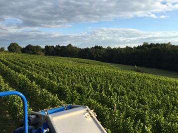 2015-Bauduc-white-harvest-23