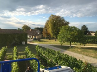 2015-Bauduc-white-harvest-24