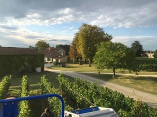 2015-Bauduc-white-harvest-24