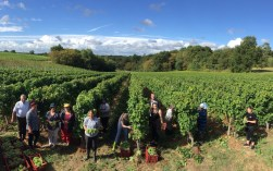 Bauduc harvest 2016 - hand picking Some of the team with the Sémillon for our sparkling crémant