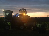 Harvest machine at dawn