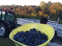 A load of Cabernet