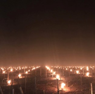 Anti frost candles in Pomerol, 13 April 2019. Image Edouard Moueix.