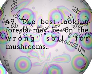 text art quote the best looking forests may be on the wrong soil