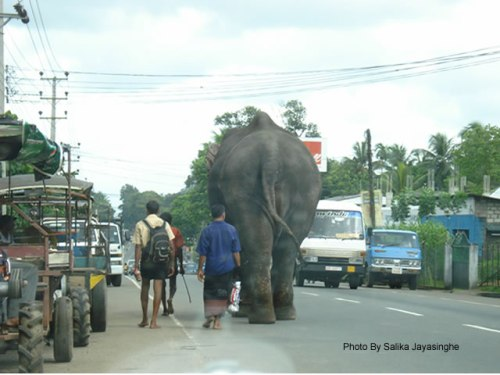 Rental Car: Don't be shocked to see elephants when you drive