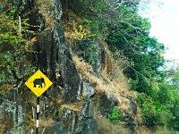 Elepnaht Crossing Sign