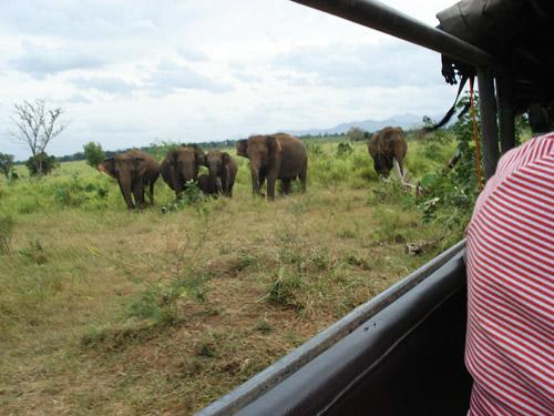 Wildlife Safari at Udawalawe
