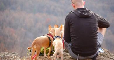 O que fazer para garantir que seu cão e você aproveitem ao máximo os dias de descanso pet