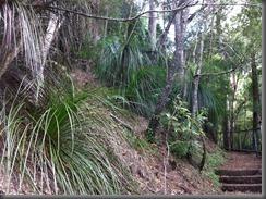 Kondalilla Falls along the track (15)