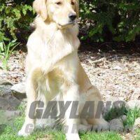 View Gaylan's Free Run Chardonnay SH NA OAJ WCX VC CCA