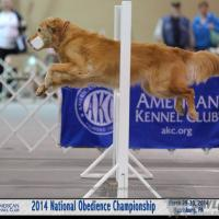 Dog Show Image from AKC Obedience Championship, April 2014