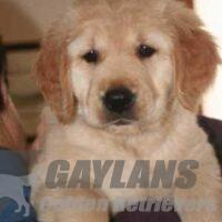 View Gaylan's Changes in Attitude CD AX AXJ NF CCA