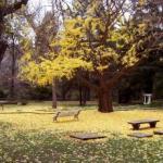 bench-autumn2-Copy-Copy