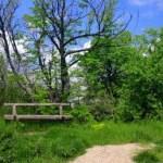 bench-overgrowngrass