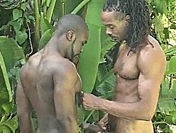 Negros avantajados no sexo hardcore