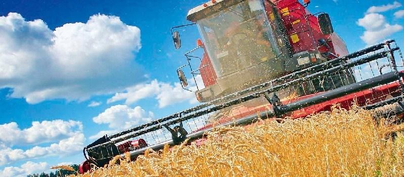 Уборка зерновых в Алтайском крае находится на завершающей стадии