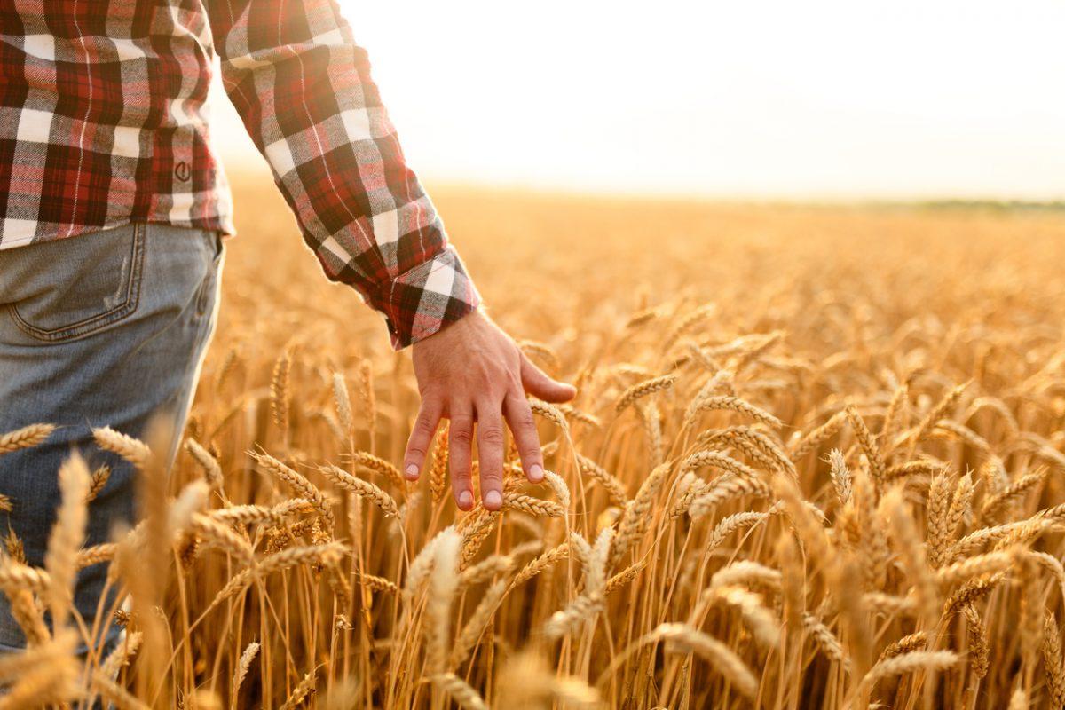 Аграрии в ожидании господдержки