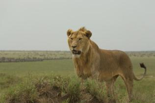 Tanzanya- Ali Kartal Biçerbay