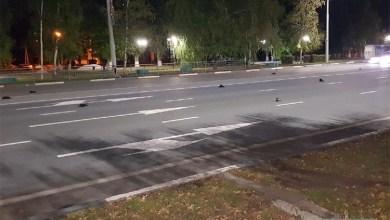 Десятки мертвых ворон рухнули на улицы Балаково