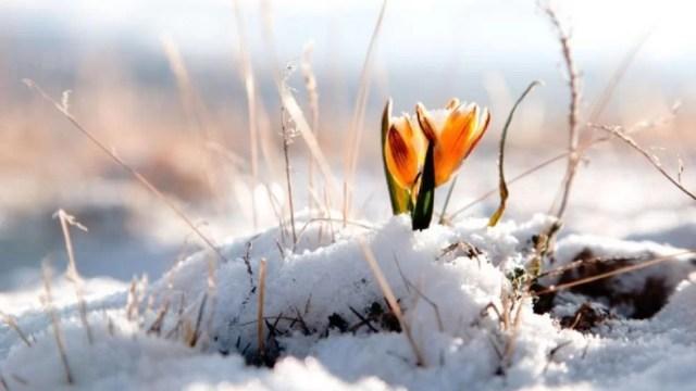 prognoza-meteo-pe-o-luna-schimbari-radicale:-temperaturi-de-primavara.-vremea-pana-pe-15-februarie