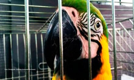 Animais silvestres apreendidos e resgatados podem ser adotados