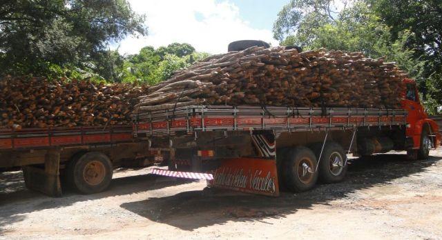 madeira-ilegal-no-brasil-18