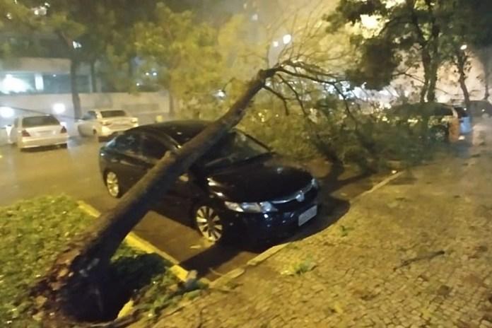 Árvore caiu sobre carro na região de Jacarepaguá. Foto: Arquivo pessoal