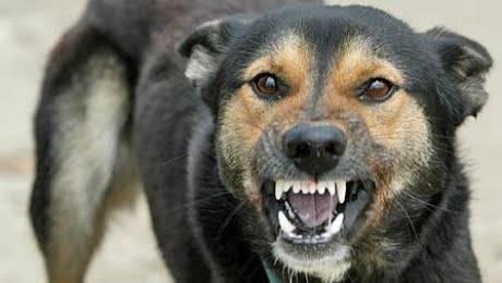 Câinii comunitari din Ploieşti intră în sesiune