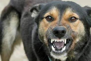 Ce facem cu haita de câini din zona Billa – Altex, în Ploieşti Vest? Scrisoarea cititorului